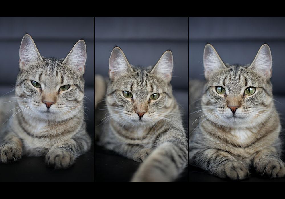Lemmikloomad / Pets